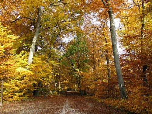 mulhouse foret du tanenwald...